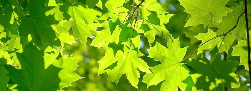Leaves closeup